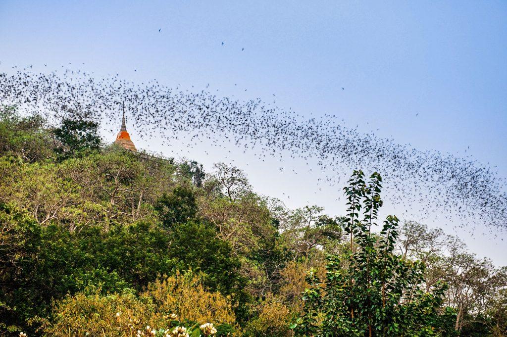 Chong Phran Mountain